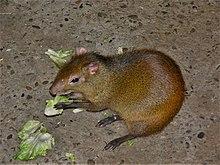 26 июл 2016. Бурундуки. Бурундук, в траве. Бурундуки — мелкие грызуны с пушистыми хвостами и сильными задними лапами. Основная часть видов встречается в северной америки и только один на территории евразии.