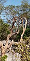Macaca cyclopis in Hsinchu Zoo 2020.jpg