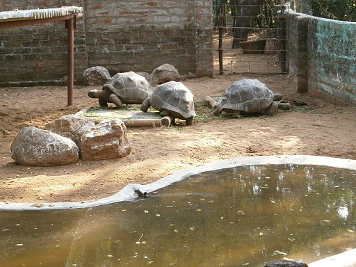 Madras-Crocodile-Bank-4