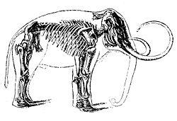 Eléphant 5  dans ELEPHANT 250px-Mammouth