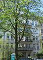 Mansteinstraße 33 Hamburg-Hoheluft (West).JPG