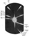 Marie Curie - L'isotopie et les éléments isotopes, 1924 (page 89 A crop).jpg