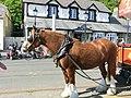 Mark the Horse - panoramio.jpg