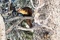 Marten in a tree (621ebf50-309f-4184-bf12-aa7d7d526cc7).jpg