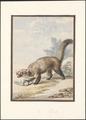 Martes foina - 1765 - Print - Iconographia Zoologica - Special Collections University of Amsterdam - UBA01 IZAA100127.tif