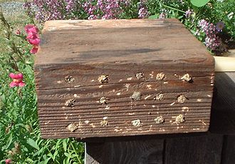 Mason bee - Home made nest block showing full occupation