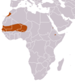 Mauritanian Shrew area.png