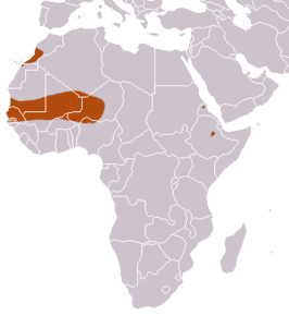 Mauritanian Shrew area.png