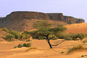 Mauritanie - Adrar2