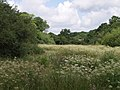 Meadow by Hole Stock Bridge - geograph.org.uk - 488869.jpg