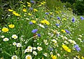 Meadow flowers - geograph.org.uk - 878028.jpg