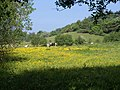 Meadow near Roebuck Farm (geograph 1900630).jpg