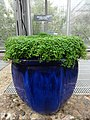 Medicinal Plants - US Botanic Gardens 27.jpg