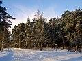 Mezs sniega - panoramio.jpg