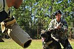 Military Working Dogs DVIDS257996.jpg
