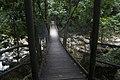 Minnamurra Rainforest - panoramio (12).jpg
