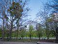 Mistletoe (26303895534).jpg