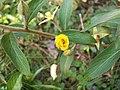 Mni botão em flor.jpg