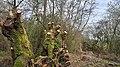 Moerputten bij 's-Hertogenbosch 01.jpg