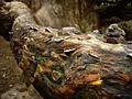 Money tree - geograph.org.uk - 536430.jpg