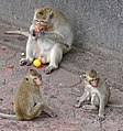 Monkeys outside Prang Sam Yot (Monkey Temple) - Lop Buri - Thailand - 01 (35028496755).jpg