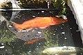 Monte Palace Tropical Garden DSC 0147 (37582509455).jpg