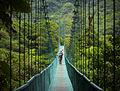 Monte Verde Verde!2.jpg