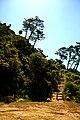 Monte de São Bartolomeu (S. Brás) (5668776545).jpg