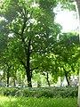 Monument Susa (Milan) 2.JPG