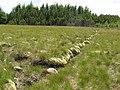 Moorland and conifer plantation - geograph.org.uk - 498857.jpg