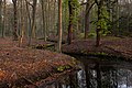 Morning in the Forest (32792410287).jpg