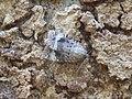 Moth (6071747340).jpg