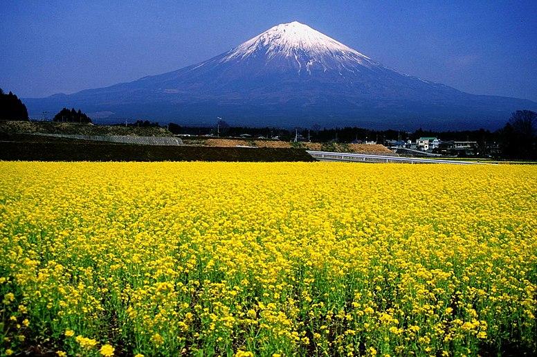 Mount Fuji and Broccolini