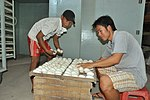 Mr. Thien inspects egg at his duck hatchery in Can Tho (14056482898).jpg