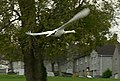 Mute Swan, Ernesettle, Plymouth - geograph.org.uk - 1144021.jpg