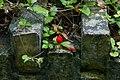 Muurbegroeiing op de Menenpoort te Ieper - 370115 - onroerenderfgoed.jpg