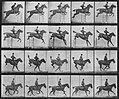 Muybridge, Eadweard - Daisy überspringt eine Hürde (2) (Zeno Fotografie).jpg