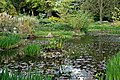 Myddelton House garden, Enfield, London ~ Lakeside near west terrace 01.jpg
