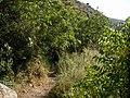 Nahal Amud trail - panoramio.jpg
