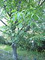 Natur in der Stadt IMG 0062.jpg