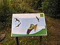 Natural England Red Kite Information Board - geograph.org.uk - 1670272.jpg