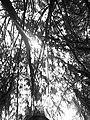Naturaleza --53333.jpg