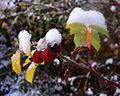 Nature in november - Sweden.jpg