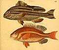 Naturgeschichte in Bildern mit erläuterndem Text (Taf. CIV) (6059223464).jpg