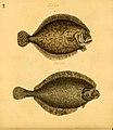 Naturgeschichte in Bildern mit erläuterndem Text (Taf. LII) (6059212792).jpg