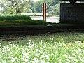Naturschutzgebiet Heuckenlock 21.05.2014 Phase 18.JPG