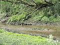Naturschutzgebiet Heuckenlock 21.05.2014 Phase 78.JPG