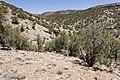 Near Atkinson Creek - Flickr - aspidoscelis.jpg