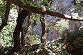 Near Castalian spring at Dedlphi, 060035.jpg