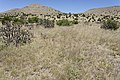 Near Cottonwood Canyon - Flickr - aspidoscelis.jpg
